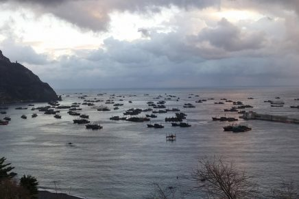 Chinese pair trawlers and lighting boats anchored in a harbour at Ulleung Island